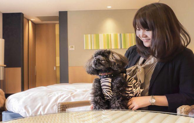 犬と泊まれるホテル