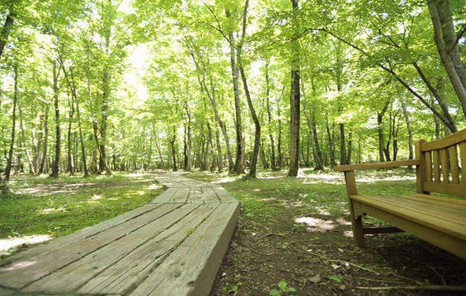 ホテル近くの自然林