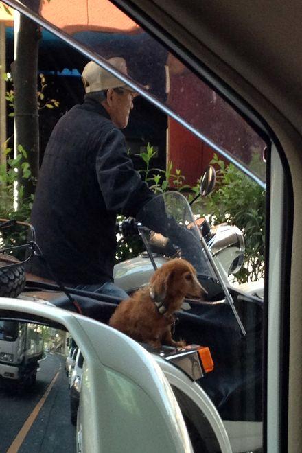 サイドカーの犬