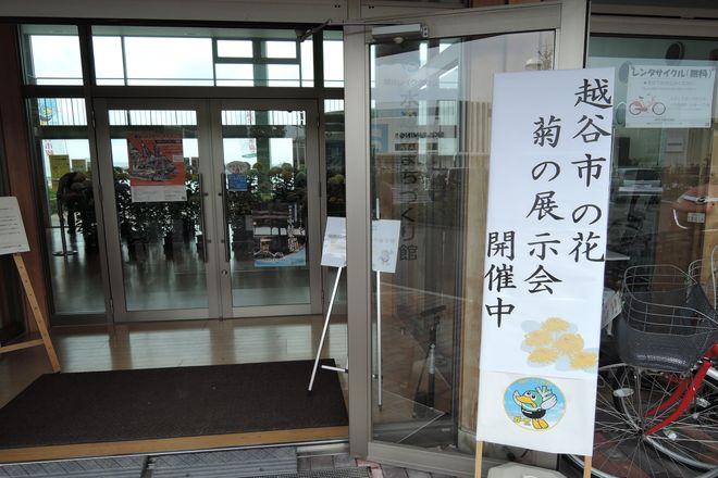 越谷市の花 菊の展示会