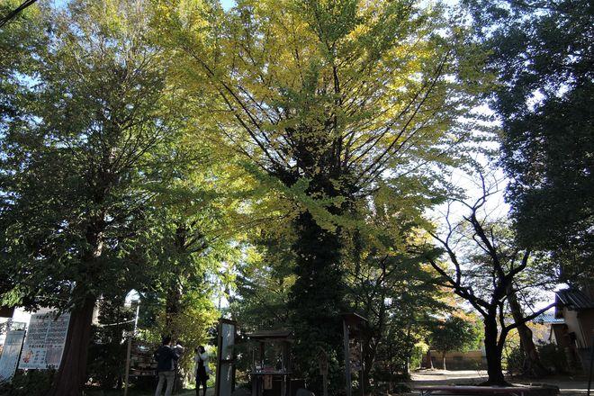 越谷香取神社にお宮参りに来た家族