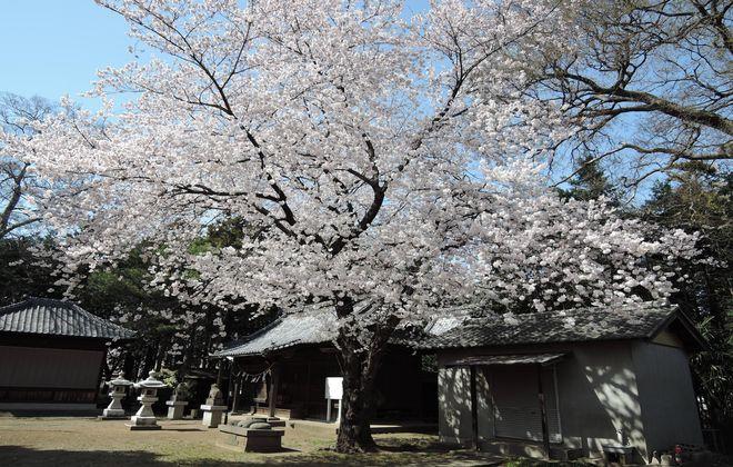 笹久保八幡神社