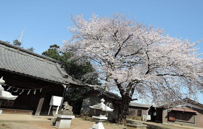 笹久保八幡神社の本堂