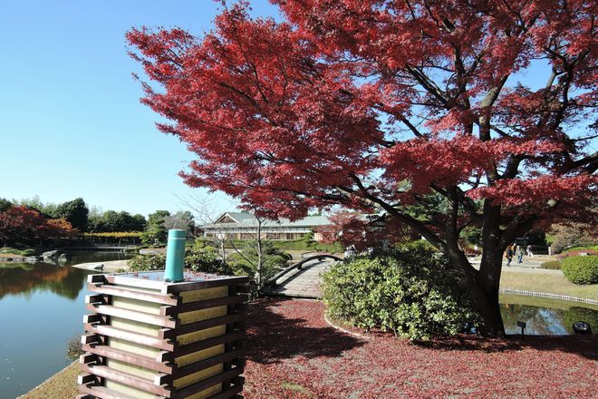 花田苑の紅葉