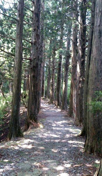 箱根公園の並木道